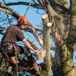 The Complete Guide to Tree Surgery