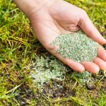 Spring Lawn Care Seeding Tips