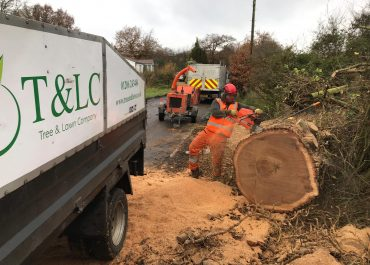 emergency call out to remove a fallen oak tree