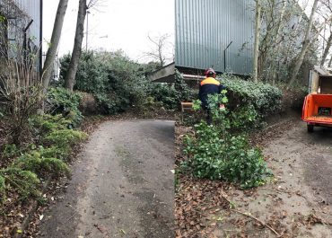 Shrub and Vegetation Clearance